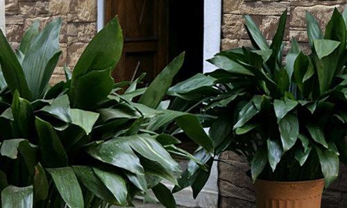 Blumentöpfe im Garten und im Hintergrund Verblender Vivid Bronze.